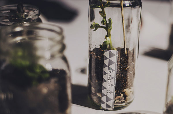 terrarium centerpiece favor