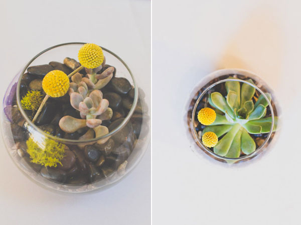 succulent terrariums with billy balls