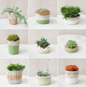 succulents in painted concrete planters