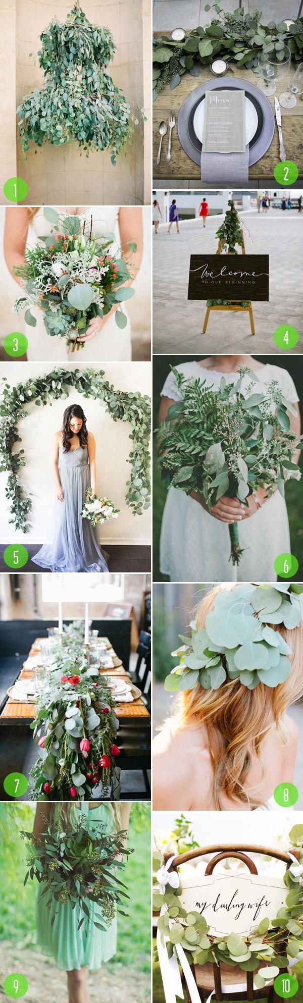 top 10: eucalyptus details