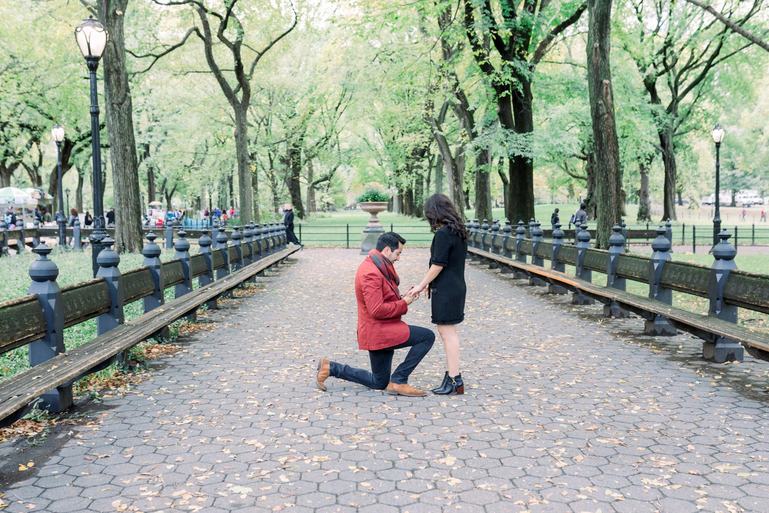 Cozy Central Park Proposal 5